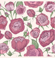 floral seamless pattern with blooming austin roses vector image