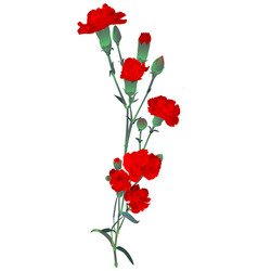 Red carnation bouquet symbol memory russian vector