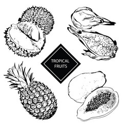 tropical fruits durian pineapple papaya vector image