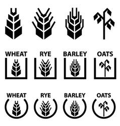 Wheat rye barley oat cereal spike ears symbols vector