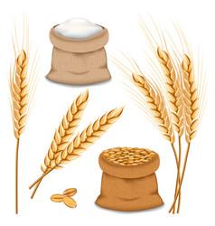 barley spikelets mockup set realistic style vector image