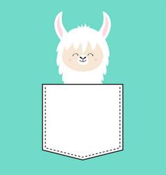 Alpaca llama face sitting in pocket t-shirt vector