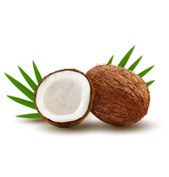 Coconut with leaves vector image