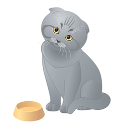 Hungry cute kitten vector image