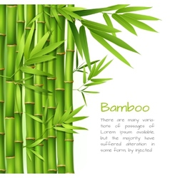 Realistic bamboo background vector image vector image