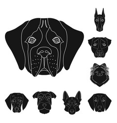 dog breeds black icons in set collection for vector image