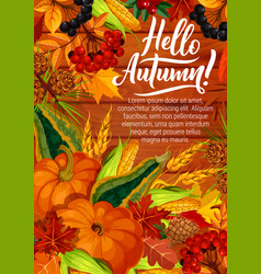 hello autumn poster with pumpkin and corn harvest vector image