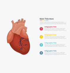 human heart infographic with some point title vector image