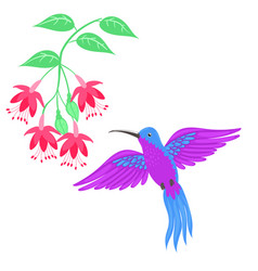 hummingbird bird isolate on a white background vector image