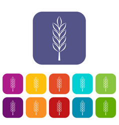 Wheat spike icons set flat vector