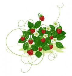wood wild strawberry vector image