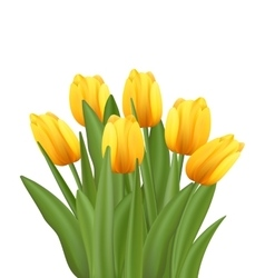 Beautiful Bouquet with Yellow Tulips Flowers vector image vector image