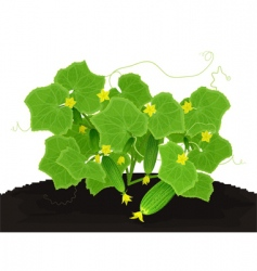 young cucumbers vector image vector image