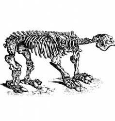 animal skeleton vector image vector image