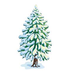 Big snow-covered fir tree vector