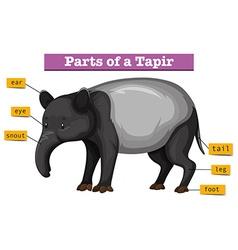 Diagram showing parts of tapir vector image