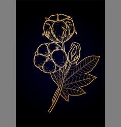 Graphic cotton plants vector