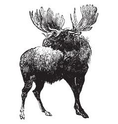 Moose vintage vector