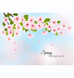 nature spring background with pink blossom cherry vector image