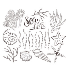 seashells sketch collection vector image