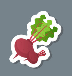 fresh beetroot with leaves sticker tasty vegetable vector image