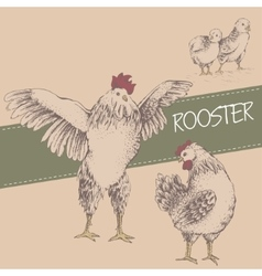 Front rooster and brood vector