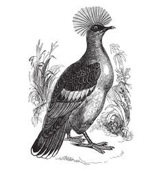 Goura crowned pigeon vintage vector