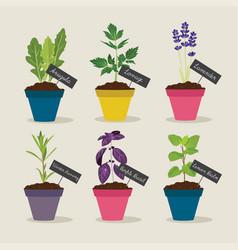 Herb garden with pots of herbs set 4 vector