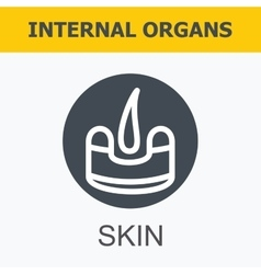 Internal organs - skin vector