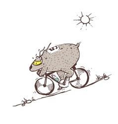 Bear riding bike fast vector image