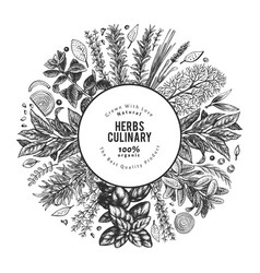 culinary herbs banner template hand drawn vintage vector image