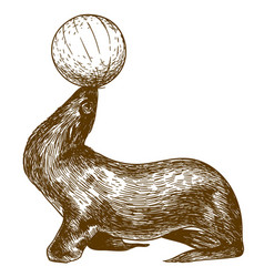 Engraving drawing of circus sea lion vector