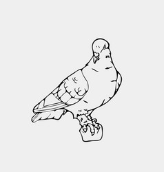 Hand-drawn pencil graphics small bird dove pigeon vector