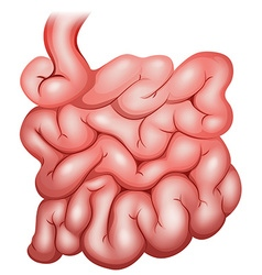 Intestine vector image