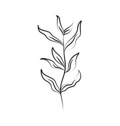 minimalist tattoo line art herb and leaves rustic vector image