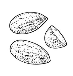 two whole and one half one half almonds nuts vector image