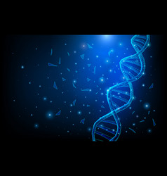 wireframe dna molecules structure mesh low poly vector image