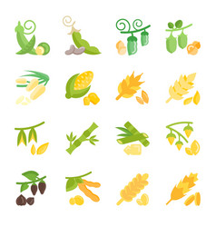 set flat icons of beans and cereals vector image
