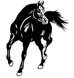 arabian horse black white vector image