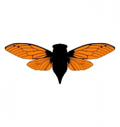 beautiful cicada vector image