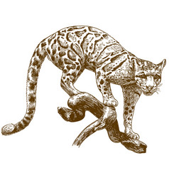 Engraving drawing of clouded leopard vector