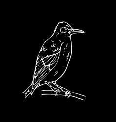Hand-drawn pencil graphics small bird starling vector