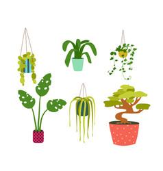 houseplants in various pots flat design vector image