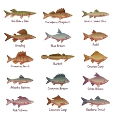 Set most popular freshwater fishes vector
