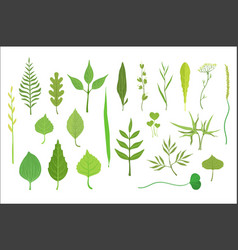 trees and plants leaf collection vector image