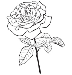 Large rose vector