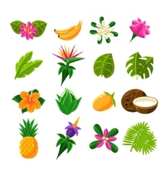 Tropical Exotic Fruits And Flora Set Of Icons vector
