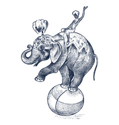 circus elephant african wild animal on the ball vector image