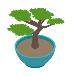 Bonsai tree icon isometric 3d style vector