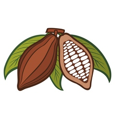 Cacao - cocoa beans vector image